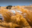 Il Russo Novikov vincitore indiscusso dell'Africa Eco Race