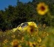 Il giallo impera nel baja San Marino