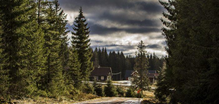 Il desolante panorama Svedese su una delle speciali della gara.